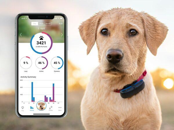 GPS hund